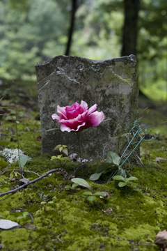 Detail from Cook family cemetery.  photograph (c) antrim caskey, 2009